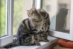 Two funny cute marble striped tabby cats sitting on the windowsill in the window. Looking outside watching birds royalty free stock images