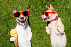 Two funny dogs with ice cream Royalty Free Stock Photos