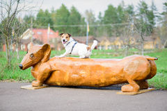 Two funny dogs: Jack Russell Terrier and dachshund Stock Photography