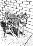 Two funny dogs sitting next to each other. Alaskan Malamutes. Interior of a rural house, brick wall and wooden floor. Pen hand drawing on paper Royalty Free Stock Photography
