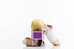 Two funny hamsters with shopping cart. Royalty Free Stock Photos