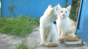 Two funny the kitten sitting friendship family slow motion video stock video