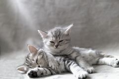 Two funny kittens stock photo