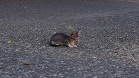 Two funny kittens and leaf. Two funny kittens and dry leaf stock video