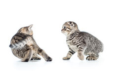 Two funny kittens playing with each other Royalty Free Stock Photos