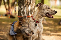 Two funny mixed breed dogs in the park Stock Photography