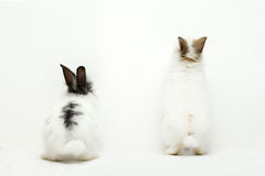 Two funny rabbits Stock Image