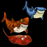 Two funny shark and Stingray on a black background Stock Photos