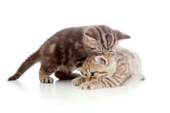 Two funny small kittens playing with each other Stock Photos