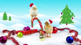 Two funny small roosters (symbol of new year 2017) in Christmas decoration. On winter background with Christmas tree and snowfall stock footage