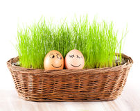 Two Funny smiling  eggs in  basket with grass. sun bath. Stock Photos