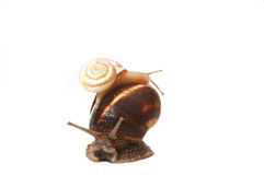 Two funny snails Royalty Free Stock Photography