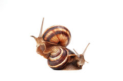 Two funny snails. Isolated in white background Royalty Free Stock Photos