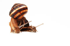 Two funny snails. Isolated on white Stock Image