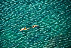 Snorkelers. Two funny snorkelers on sea surface Stock Images