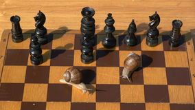 Two garden burgundy snails on wooden chessboard playing in chess stock video
