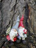 Two Christmas garden gnomes in the forest, in front of an old tree trunk. Two Garden gnomes with a small christmas tree in front of an old tree trunk royalty free stock images