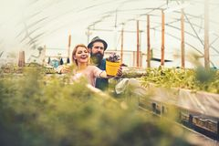 Two gardeners look at beautiful flower in yellow pot. Brutal man in fedora hat with long beard hugging smiling blond stock images