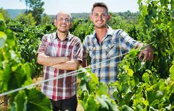 Two  gardeners standing together in grapes tree yard Royalty Free Stock Photos
