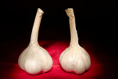 Two garlic bulbs Royalty Free Stock Photos