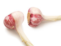 Two garlics. Two young garlic head against white background Royalty Free Stock Photos
