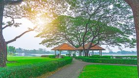 The two gazebo with orange roof under green leaves of big Rain tree on green grass lawn and shrub, grey pattern walkway in the royalty free stock photos