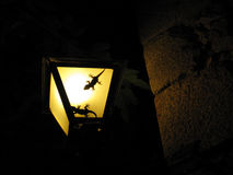 Two geckos in a lamp Royalty Free Stock Photo