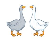 Two geese white and gray, cartoon funny goose isolated on white background, goose domestic nature character, poultry royalty free illustration
