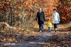 Two Generation Family Walking in Autumnal Forest Front View. Two Generation Family Walking in Autumnal Forest Alley Father Mother Holding Hands of Little Baby Royalty Free Stock Images