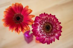 Two gerbera. In a vase Royalty Free Stock Photos