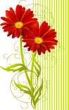 Two gerbera flower background Stock Photo