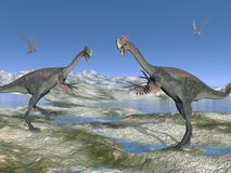 Two gigantoraptor Stock Images