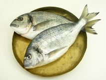Two gilded head sea bream. On a coper tray royalty free stock photo