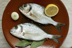 Two gilthead on ceramic plate Royalty Free Stock Image