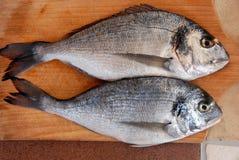 Two gilthead fish Royalty Free Stock Photo