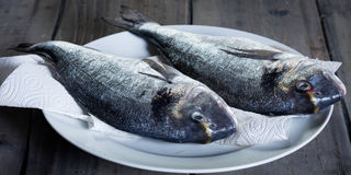 Two gilthead on a white plate Stock Images