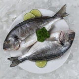 Two giltheads fish on a plate Stock Images