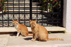 Two ginger cat on the street- Crete, Greece Royalty Free Stock Photos