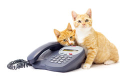 Two Ginger Kittens Lying On A Phone. Two ginger kittens sitting together with a business phone. One is looking up while the other is chewing on the phone. They' Royalty Free Stock Photos