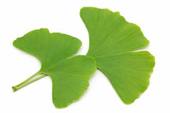 Two ginkgo leaves Stock Images