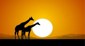 Two Giraffe against the setting sun and hills. Silhouette. Vector illustration: Two Giraffe against the setting sun and hills. Silhouette Stock Photography