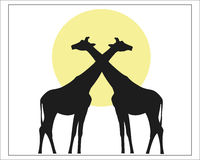 Two giraffe on background of yellow sun. Giraffes black silhouette against the sun vector image. African wildlife Royalty Free Stock Image