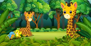 Two Giraffe in the forest. Illustration of Two Giraffe in the forest Stock Photography