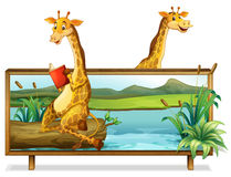 Two giraffe by the lake. Illustration Stock Photo