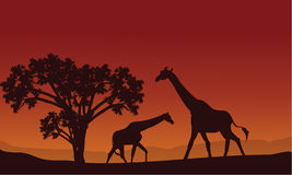Two giraffe silhouette scenery. At the hills Stock Photography