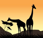 Two giraffes on a background of sunset Stock Images