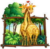 Two giraffes hugging in the jungle Royalty Free Stock Photos