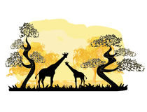 Two giraffes silhouette, with jungle landscape Stock Photography