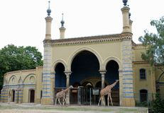 Two giraffes walking in front of their home in the Berlin Zoo in Germany Royalty Free Stock Photo