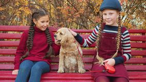 Two girl friends sitting on bench together cocker spaniel in autumn park. Happy girls stroking lovely dog on park bench